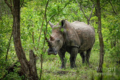 Wall Art - Photograph - White Rhino by Pippa Dini
