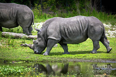 Photograph - White Rhino by Rene Triay Photography