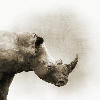 Photograph - White Rhino Sepia Closeup Square by Susan Schmitz
