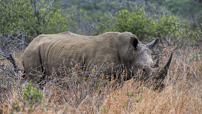 African Horned Animal Photograph - White Rhino by Stephen Stookey