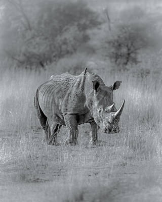 Photograph - White Rhino by Tex Wantsmore