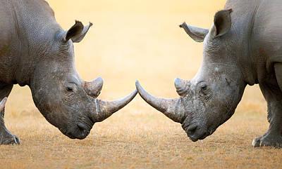Animals Photos - White Rhinoceros  head to head by Johan Swanepoel