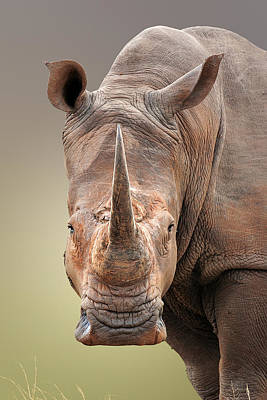 Portraits Royalty-Free and Rights-Managed Images - White Rhinoceros portrait by Johan Swanepoel
