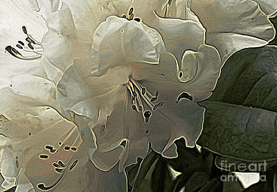 Photograph - White Rhodie Art by Erica Hanel