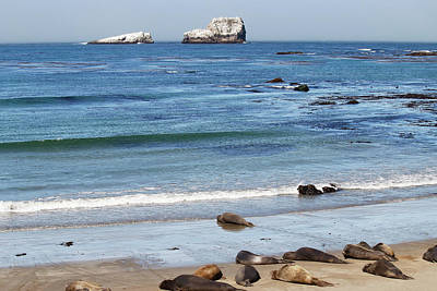 Photograph - White Rocks And Elephant Seals by Art Block Collections
