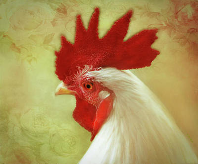 White Rooster Art Print