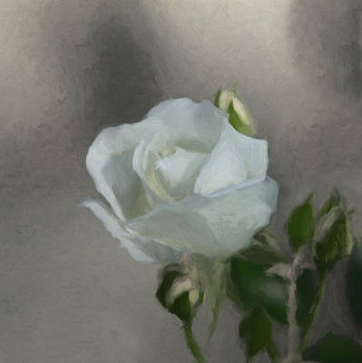 Digital Art - White Rose 2 by Ernie Echols