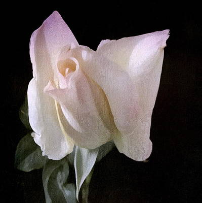 Photograph - white rose 3931 Hdr photo by S Art