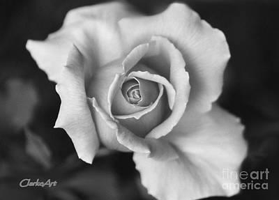 White Rose On Black Art Print