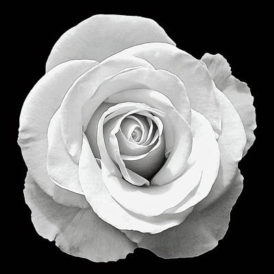 Photograph - White Rose by Aimee L Maher ALM GALLERY