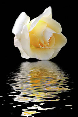 White Rose Art Print by Angel Jesus De la Fuente