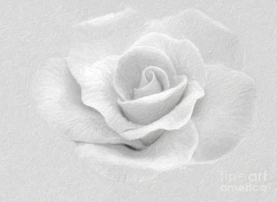 Photograph - White Rose by Ed Churchill