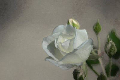 Digital Art - White Rose by Ernie Echols