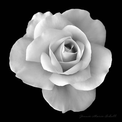 Photograph - White Rose Flower In Black And White by Jennie Marie Schell