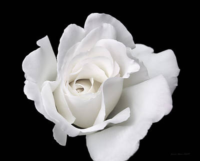 Photograph - White Rose Flower On Black by Jennie Marie Schell