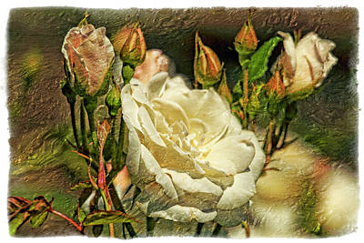 Pink Rose Bushes Digital Art - White Rose by Geraldine Scull