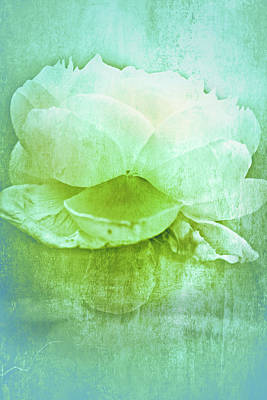 Photograph - White Rose In Blue by Lali Kacharava
