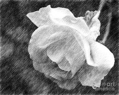 Floral Digital Art Drawing - White Rose In Pencil by Smilin Eyes  Treasures