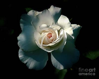 Photograph - White Rose In The Shadows by Patricia Strand