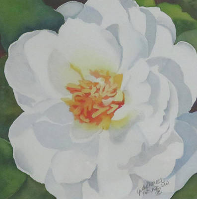 Painting - White Rose by Judy Mercer