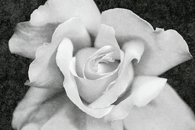 Art Print featuring the photograph White Rose Macro Black And White by Jennie Marie Schell
