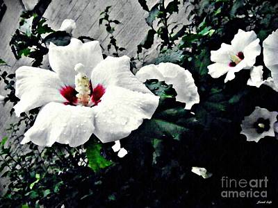 Althea Photograph - White Rose Mallows 2 by Sarah Loft