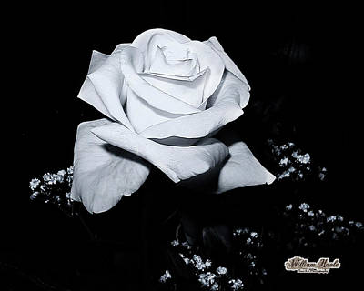 Photograph - White Rose N Babies Breath by William Havle