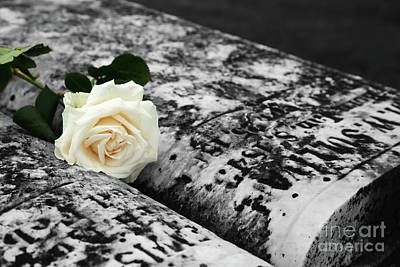 White Rose On Grave For Memorial Day Art Print