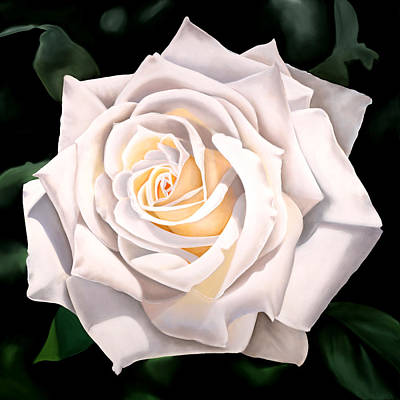 White Rose Art Print by Ora Sorensen