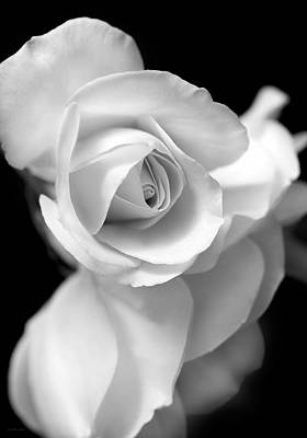 White Rose Petals Black And White Art Print