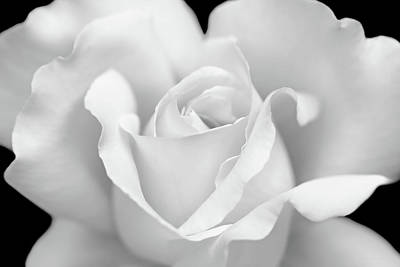 Art Print featuring the photograph White Rose Purity by Jennie Marie Schell