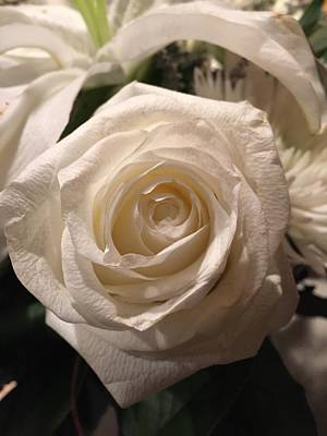 Photograph - White Rose by Shawn Hughes