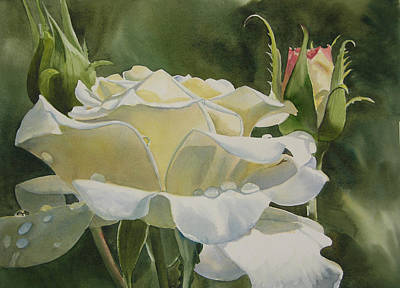 Painting - White Rose With Raindrops by Sharon Freeman