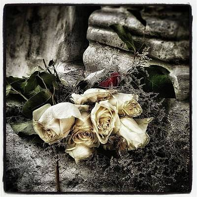 Photograph - White Roses For Mother Mary. Devotees by Jim James