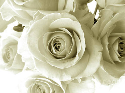 Photograph - White Roses by Nina Ficur Feenan