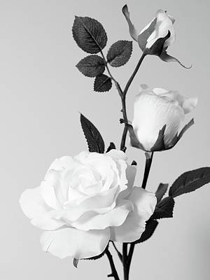 Photograph - white roses No.2 by Tom Druin