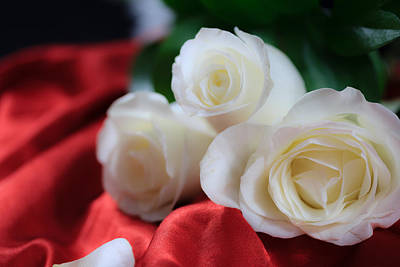 Photograph - White Roses On Red Satin by Joni Eskridge