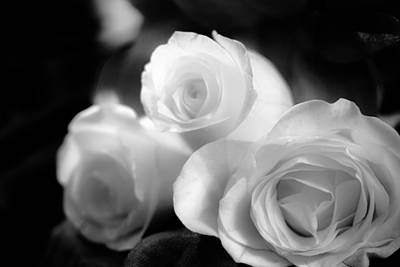Photograph - White Roses On Satin by Joni Eskridge