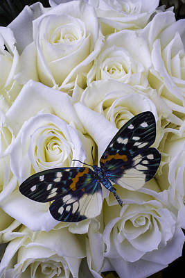 White Rose Photograph - White Roses With Colorful Butterfly by Garry Gay