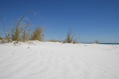Photograph - White Sand Holders by Dylan Punke