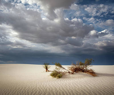 Photograph - White Sands 5x6 by James Barber