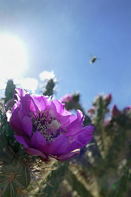 Photograph - White Sands Cactus Bloom by Jeff Brunton