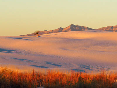 Photograph - White Sands Dawn #27 by Cindy McIntyre