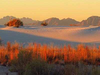 Photograph - White Sands Dawn #28 by Cindy McIntyre