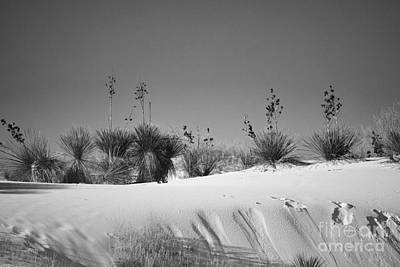 Photograph - White Sands Desert Nature Landscape by Andrea Hazel Ihlefeld