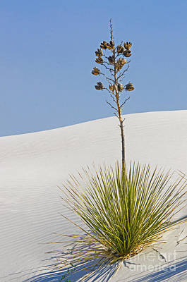 Photograph - White Sands National Monument, Nm by Millard H. Sharp