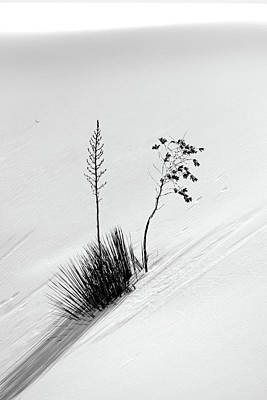Photograph - White Sands Yucca 5 by Jeff Brunton