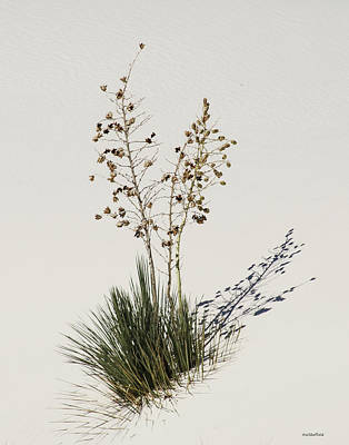 Photograph - White Sands Yucca by Allen Sheffield