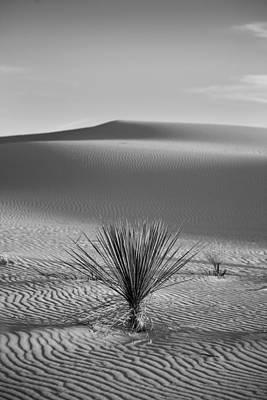 White Sands Yucca Art Print