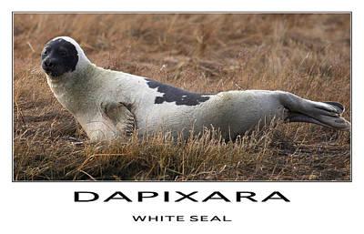 White Seal  Print by Dapixara Art